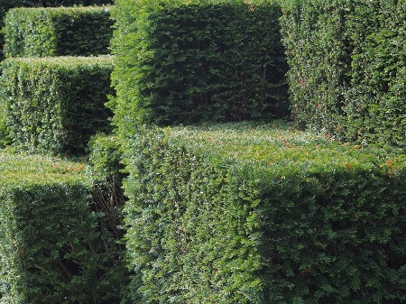 Maintenance pruning to maintain form